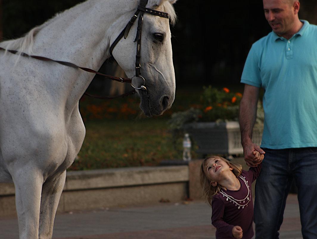 лошадь - koko