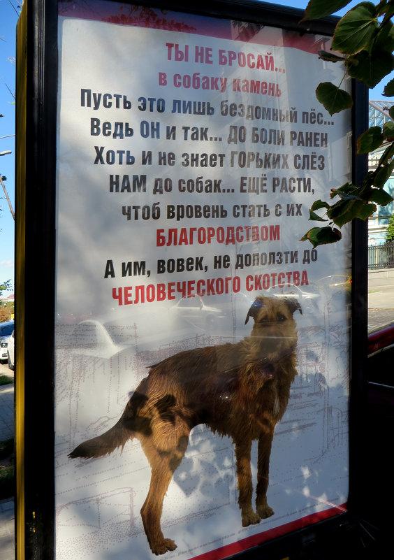 Ты не бросай в собаку камень - Наталья (D.Nat@lia) Джикидзе (Берёзина)