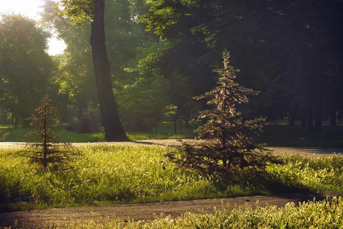 утро в парке - Татьяна Найдёнова