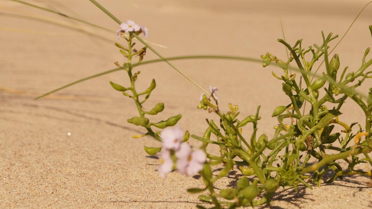 жизнь в дюнах 2 - Андрей