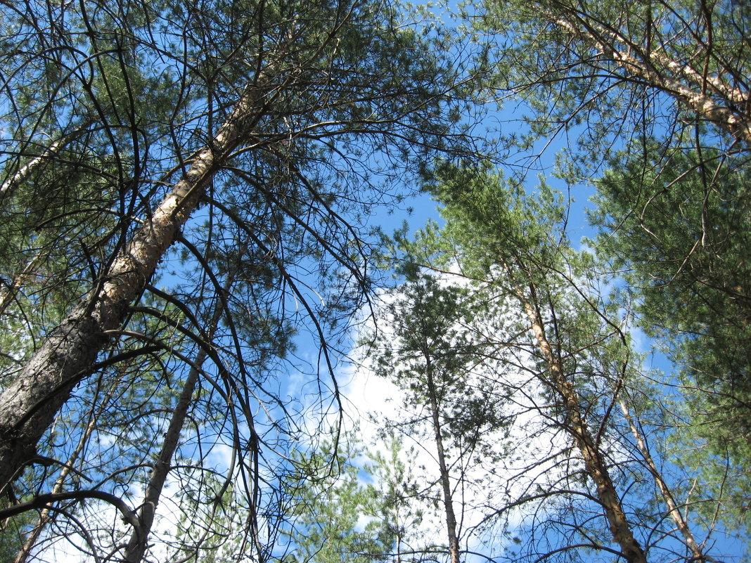 Сентябрьский лес - Татьяна Литвинова