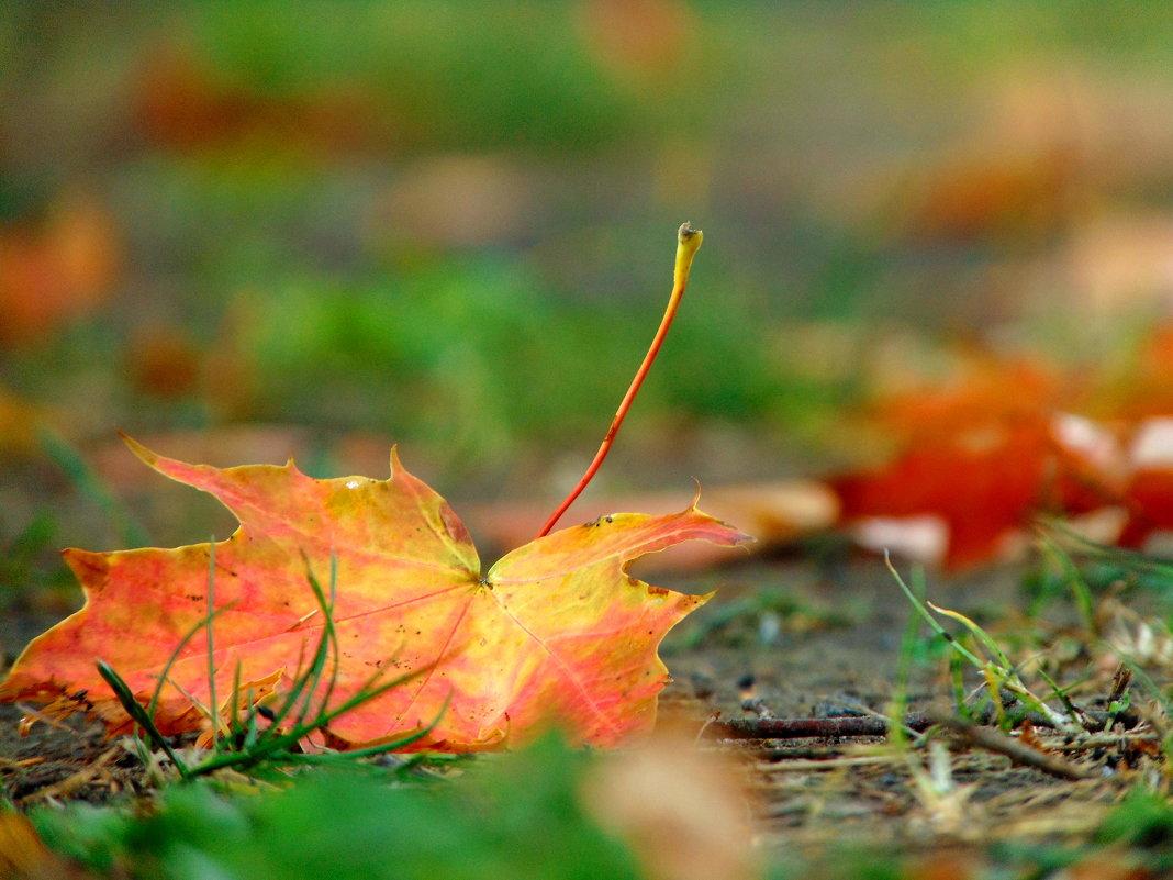 Вот и осень... - Anna