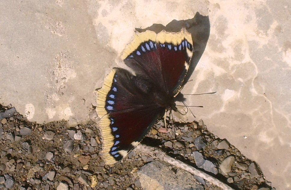 Что же привлекло бабочку? - татьяна