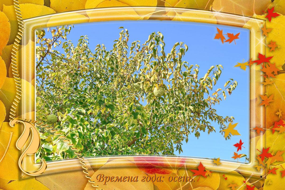Наша осень. - Анатолий Чикчирный