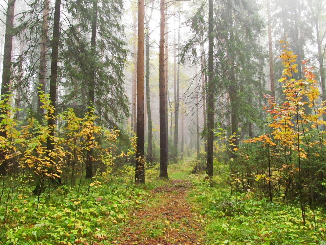 Осень бродит по лесным тропинкам - Юрий Кузмицкас