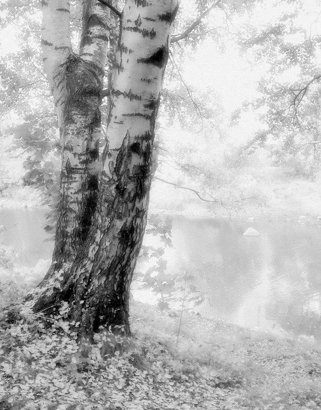 Берёза и осень - Виталий