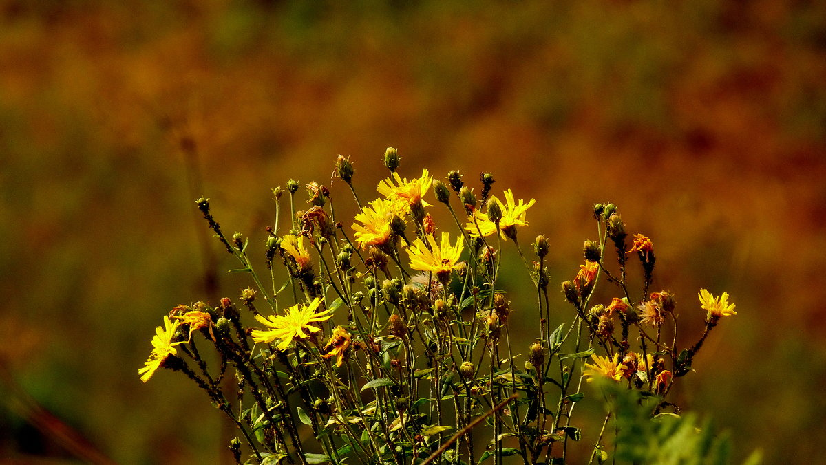 осенние цветы - Александр Прокудин