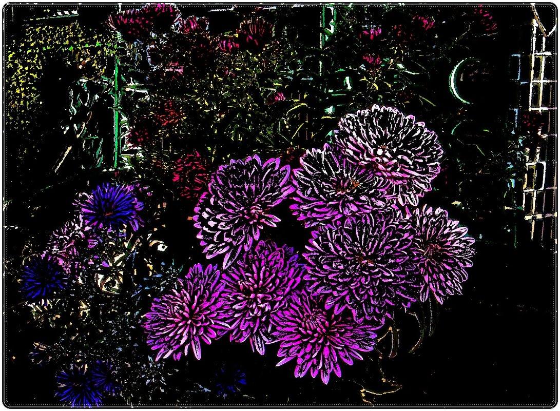 Хризантемы и сентябринки. - Нина Корешкова