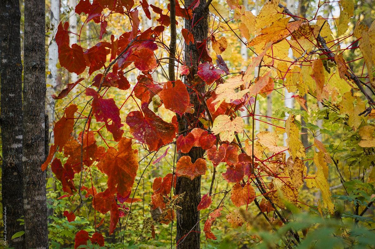 Осенний лес! - Ирина Антоновна