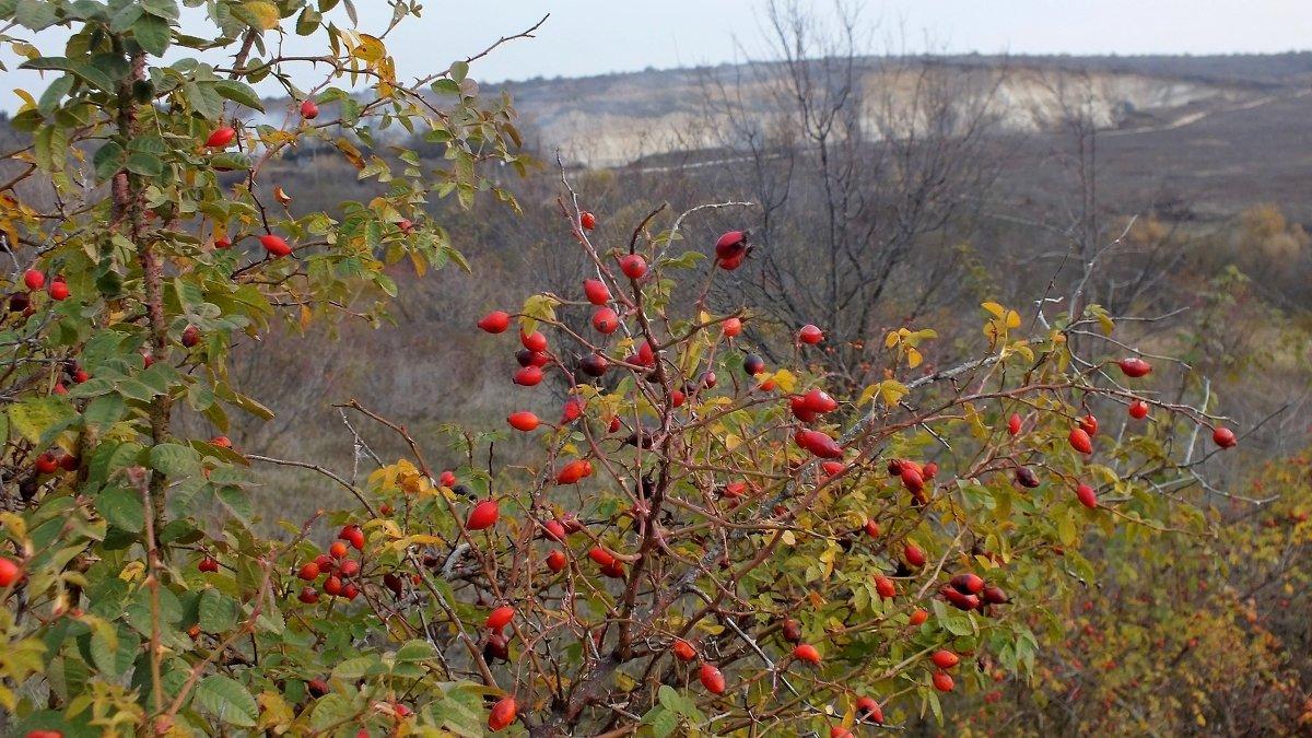 Осень - Владимир