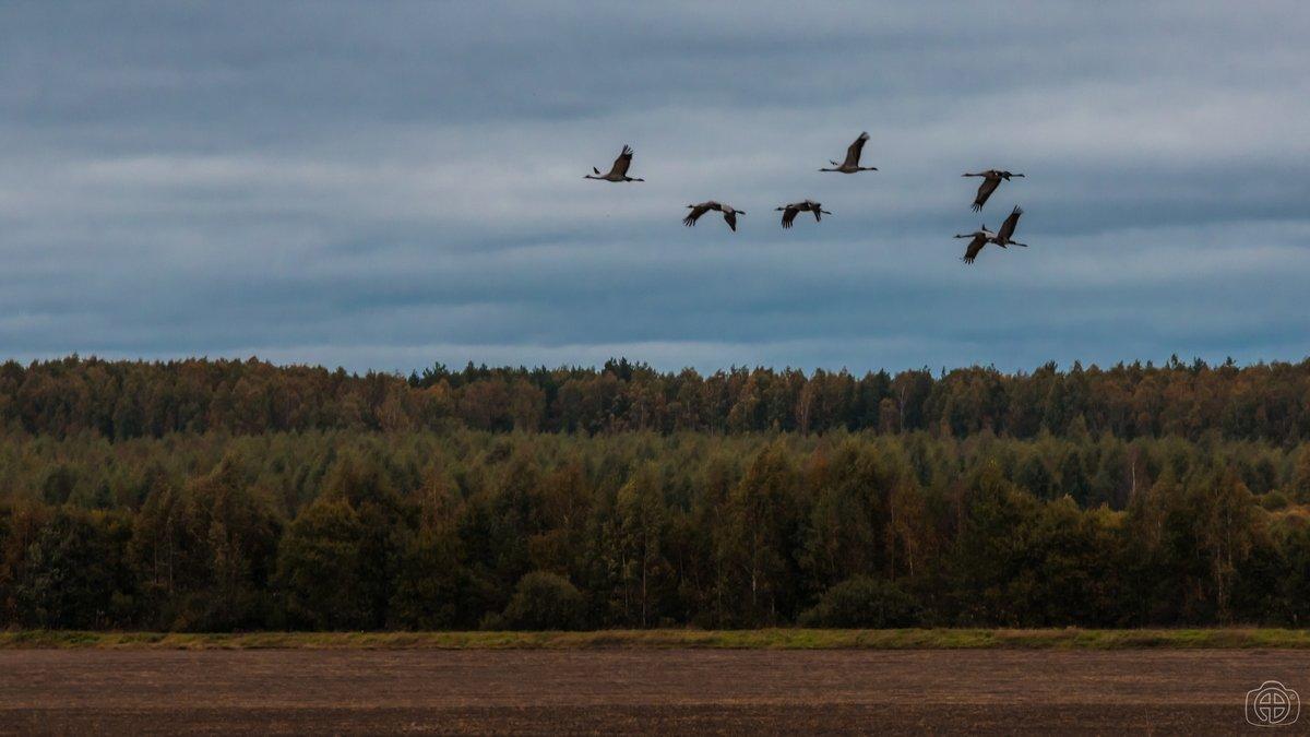 Птицы, изменницы, нас покидают... - Андрей Вигерчук