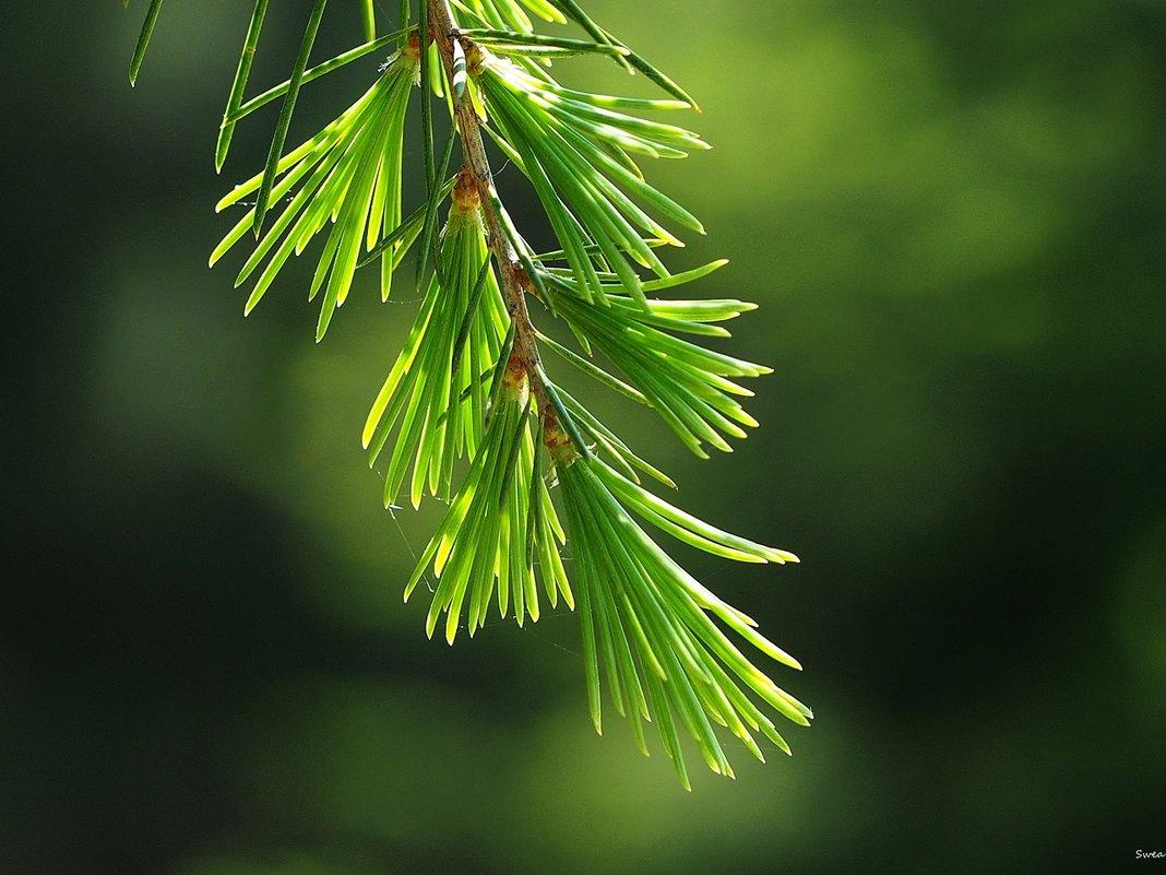 В зеленом свете - Swetlana V
