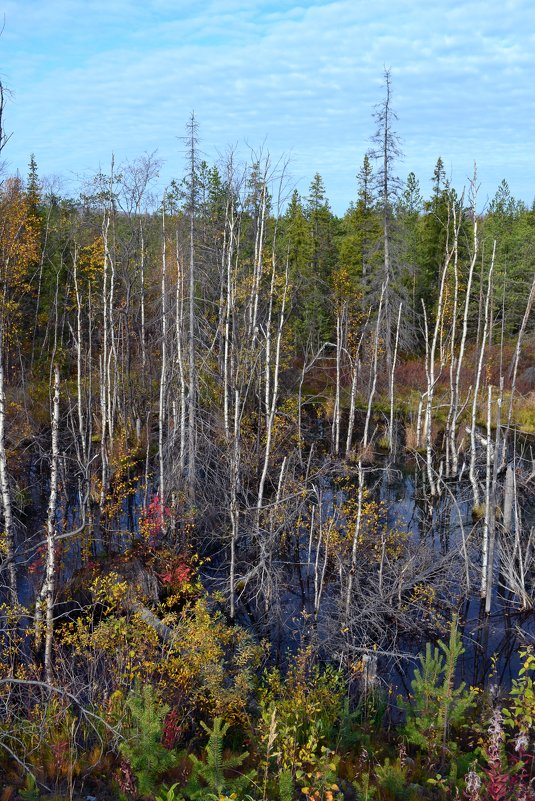 Осень на болотах - Ольга