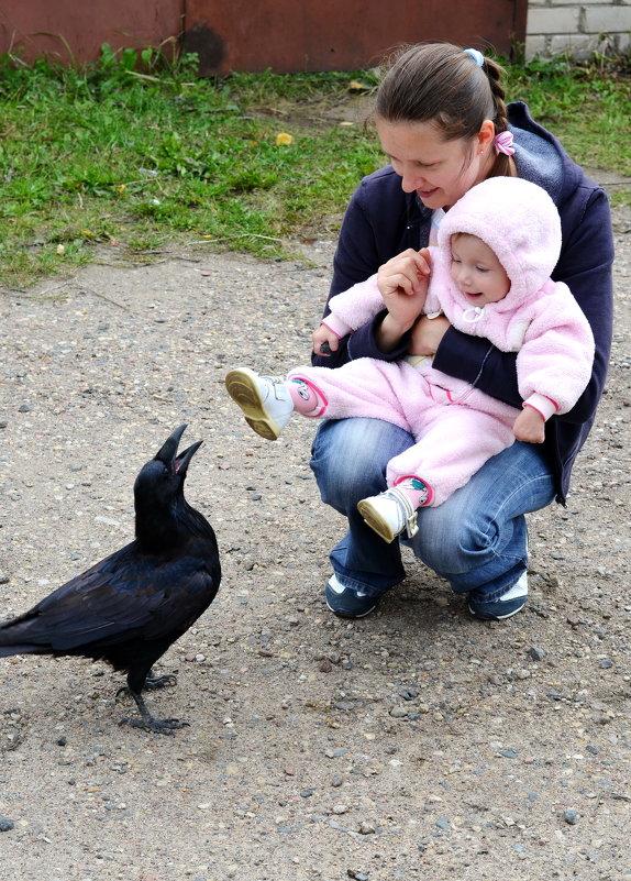 Ворон в поисках общения и еды... - Марина Романова