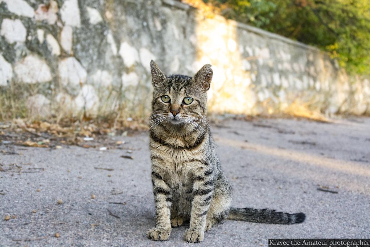 Кот осознавший всё... - Миша Кравец
