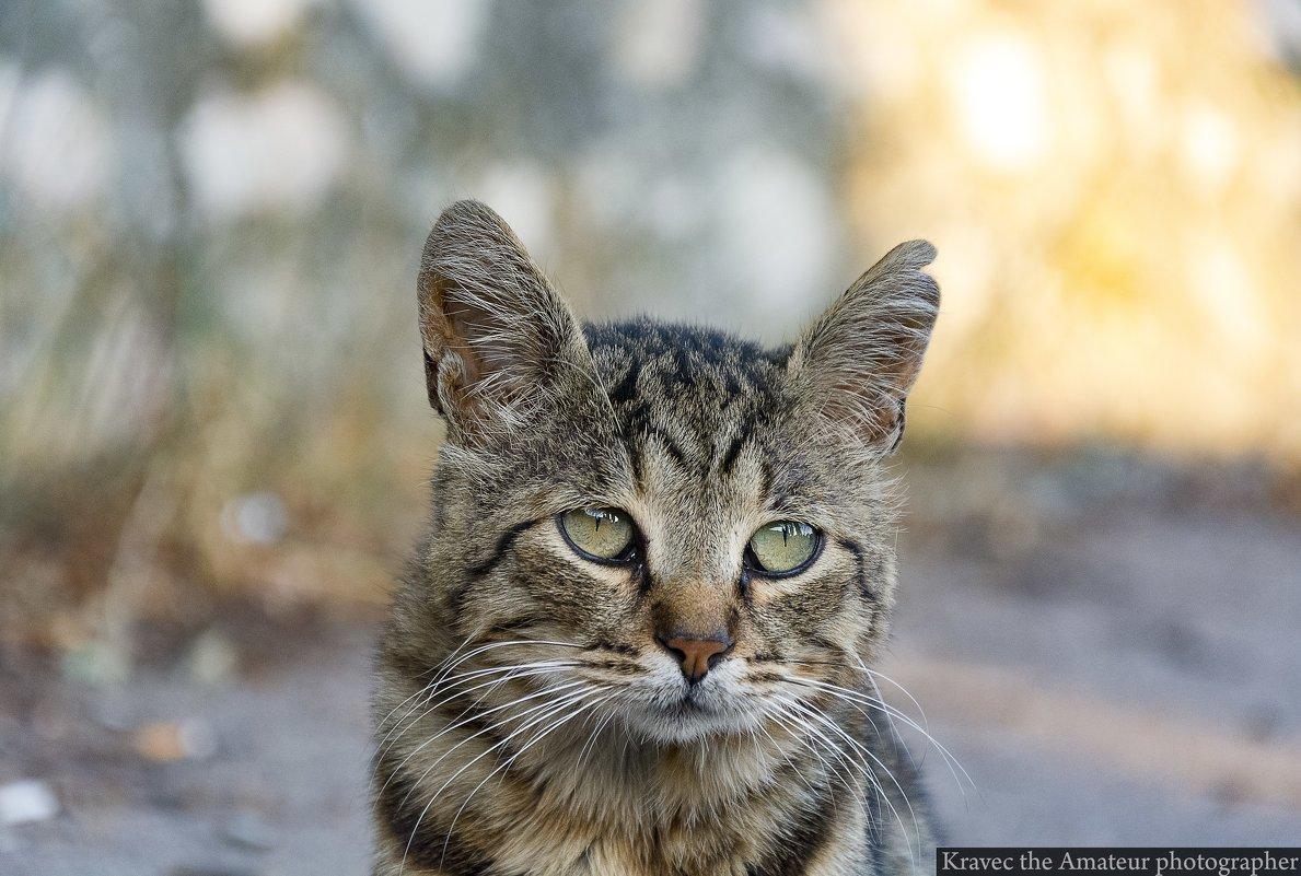 Брошенный кот - Миша Кравец