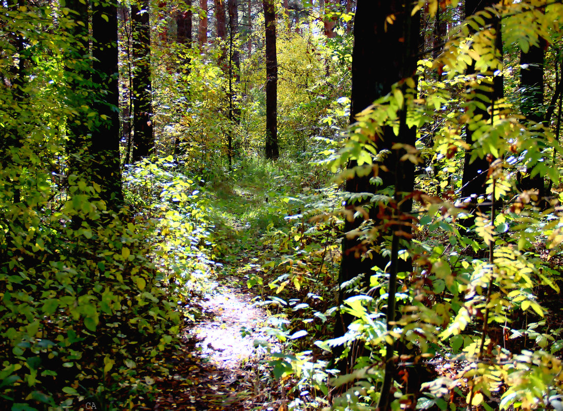 Уголок леса - Александр Садовский