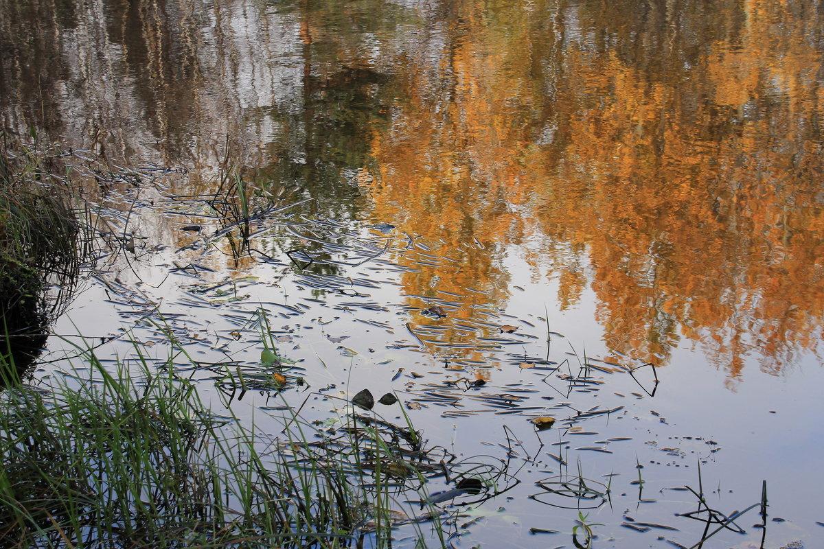 Осень в сентябре - Светлана Ку