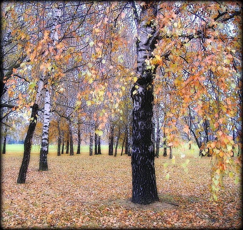 Осень - Михаил Цегалко