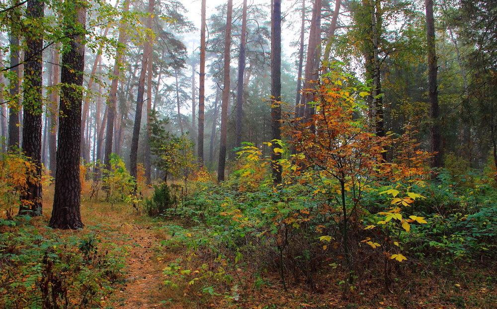 Дождевой печали полон лес... - Лесо-Вед (Баранов)