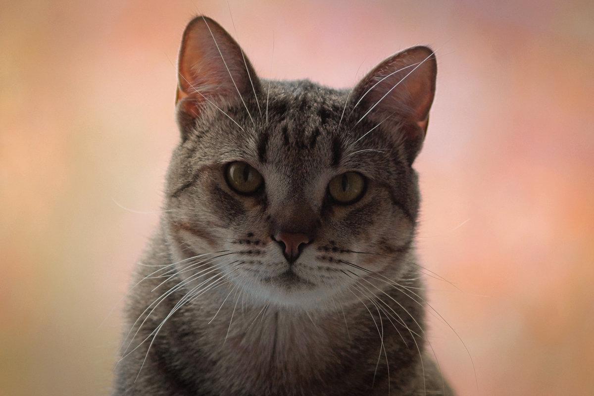 Котенька Сонька - Дмитрий