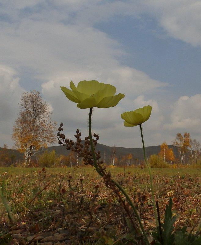 на фоне Осени - Анна