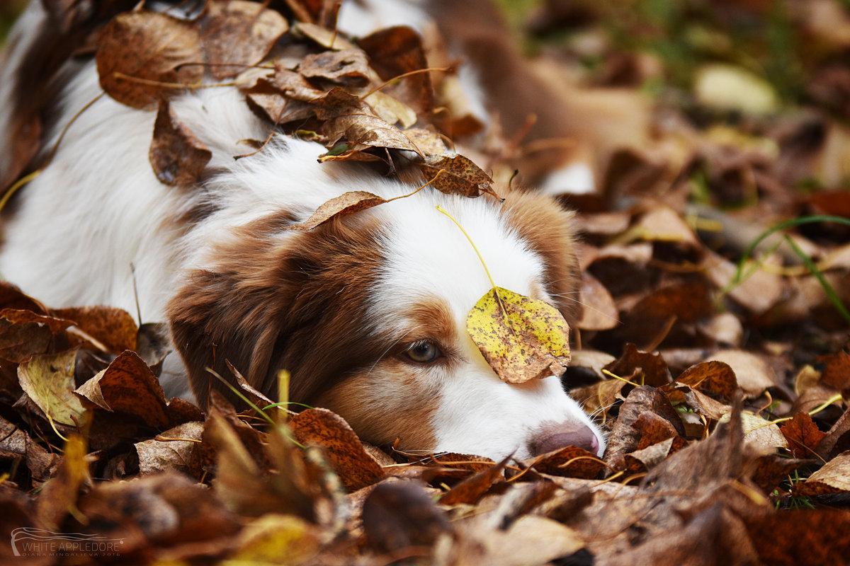 Осеннее настроение - Диана