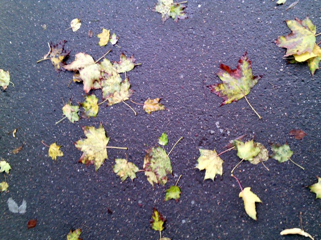 Осень рисует на мокром алфальте. - Ольга Кривых