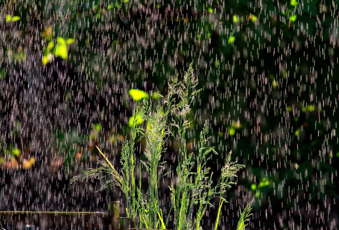 Летний  дождь - Наталья Казанцева