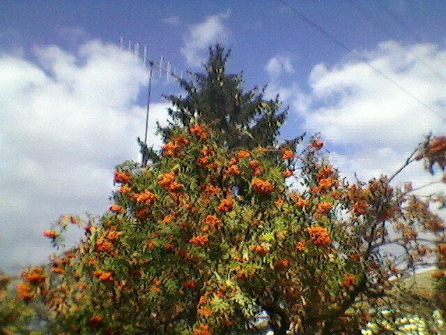 Осень - Миша Любчик