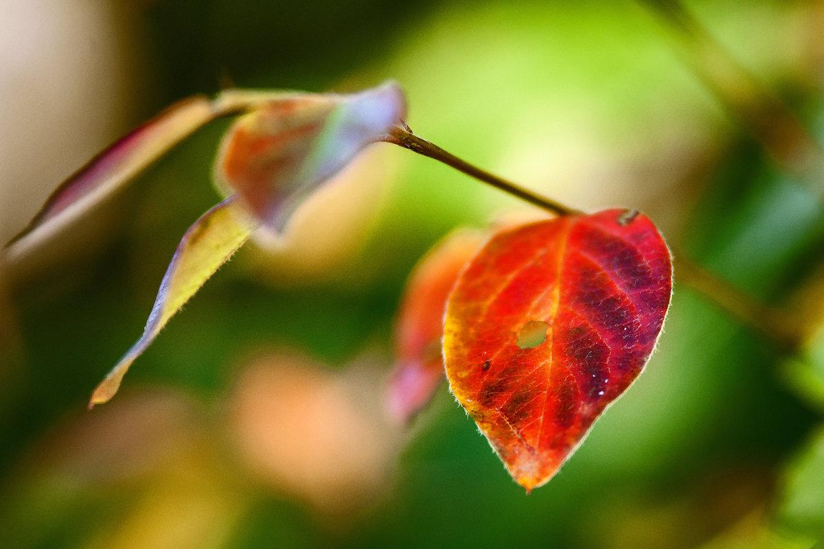 осень - раф