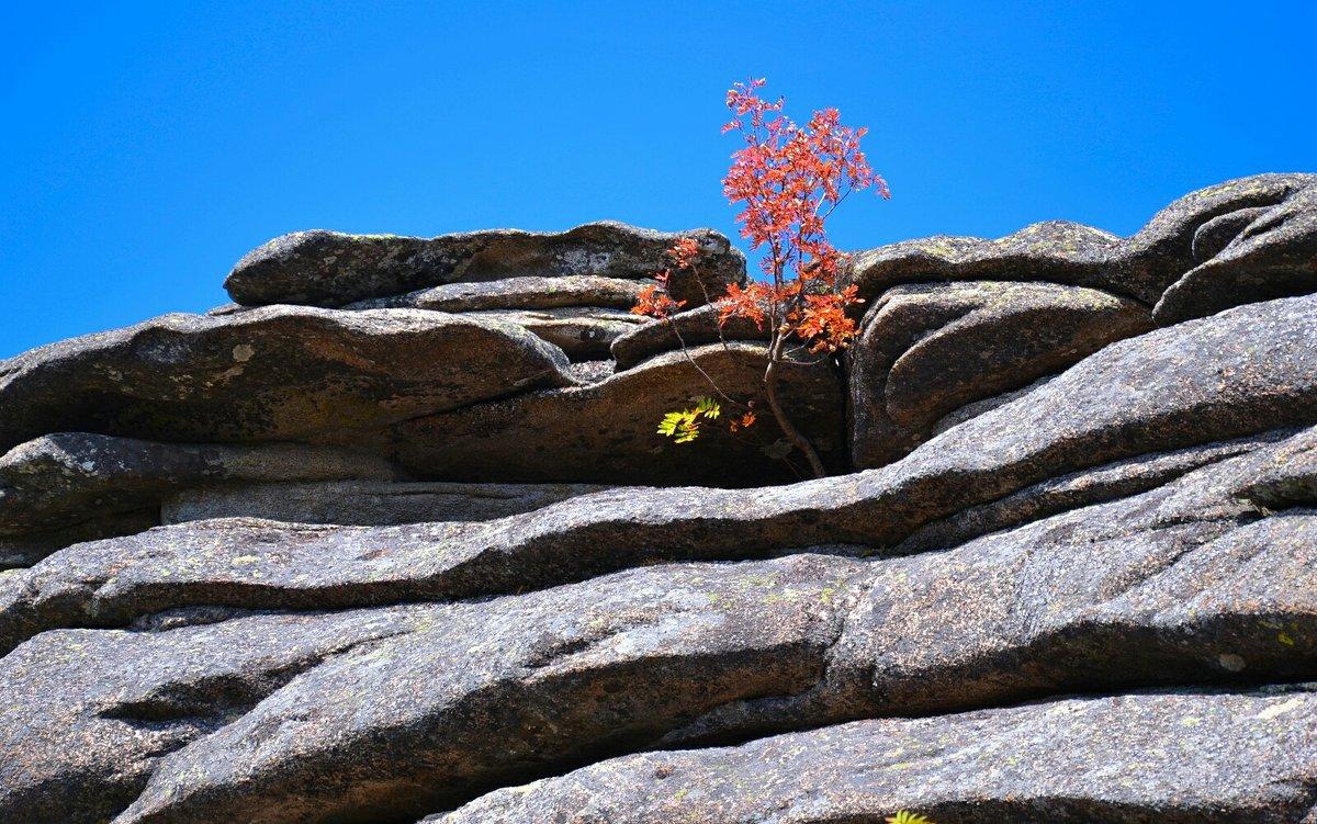 И на скалах растут деревья - Милешкин Владимир Алексеевич