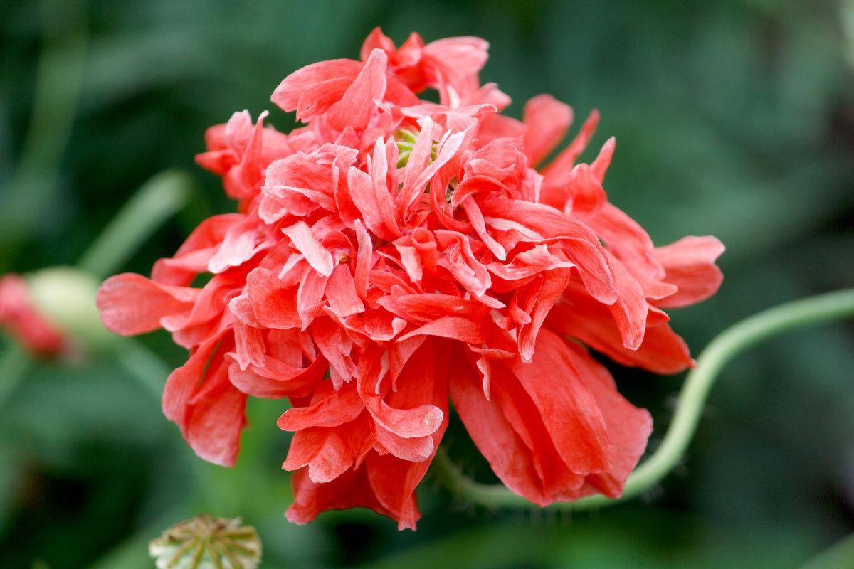 Цветы - Сергей Михайлов