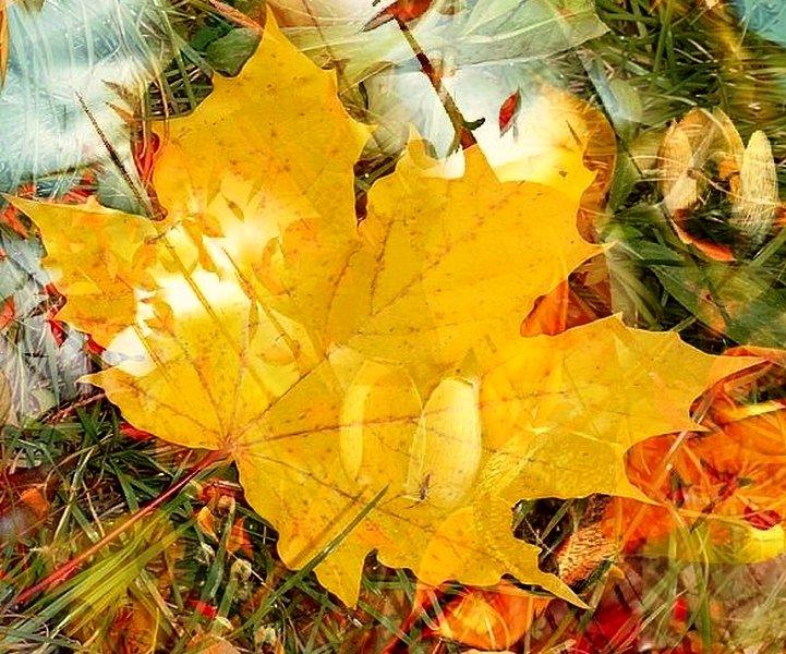 Последний желтый лист... - анна нестерова