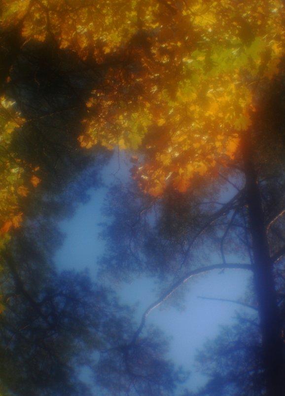 Осень...  сквозь  ресницы... - Валерия  Полещикова