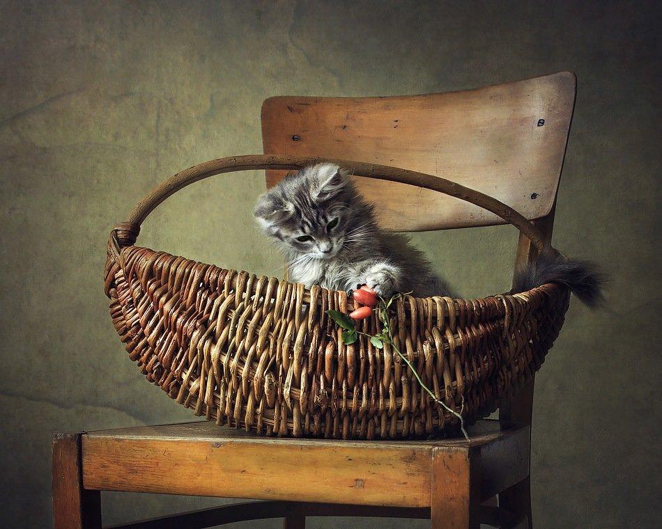 Когда котенку нечем поиграть... - Ирина Приходько