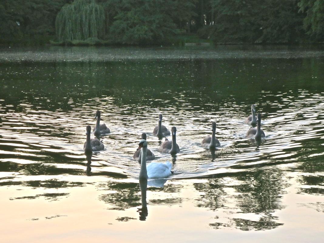 лебединое озеро - Елена