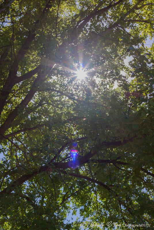 сквозь листву - юрий мотырев