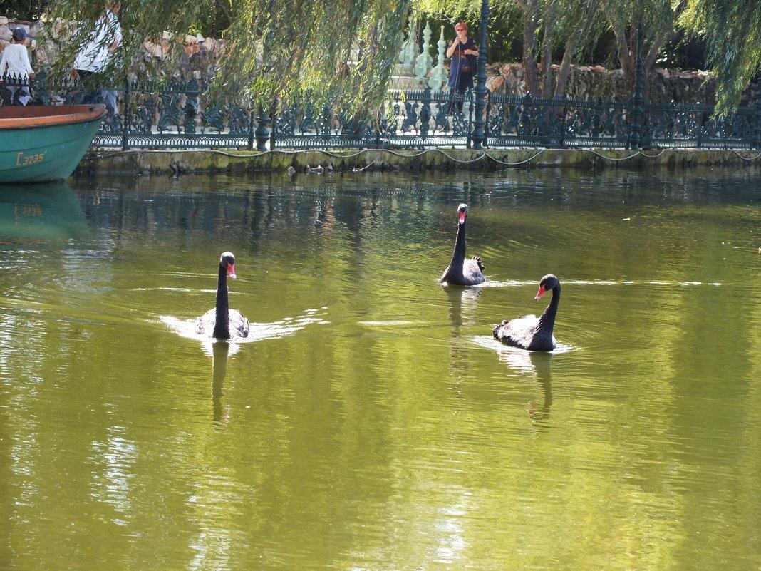 черные лебеди - Natali Kosheleva