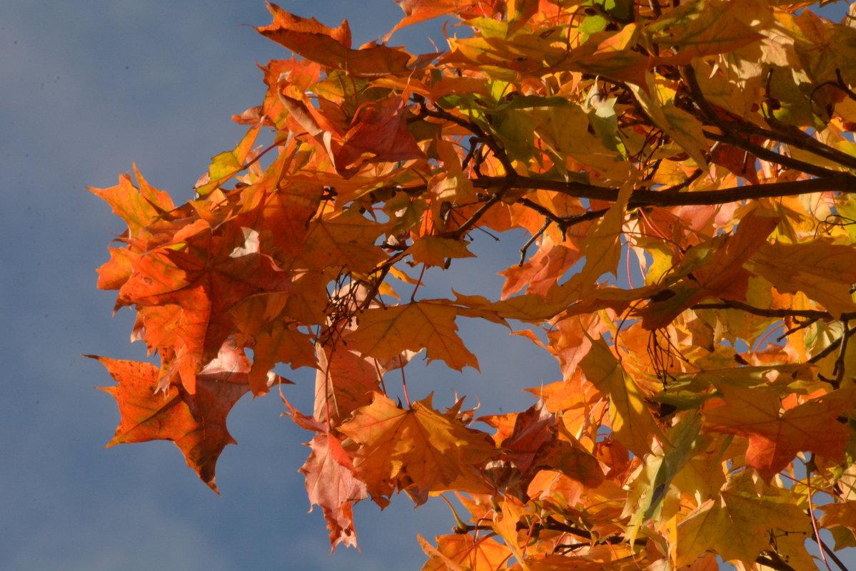 Рыжая  осень на ветке сидела, песню осеннюю радостно пела.... - Валентина Папилова