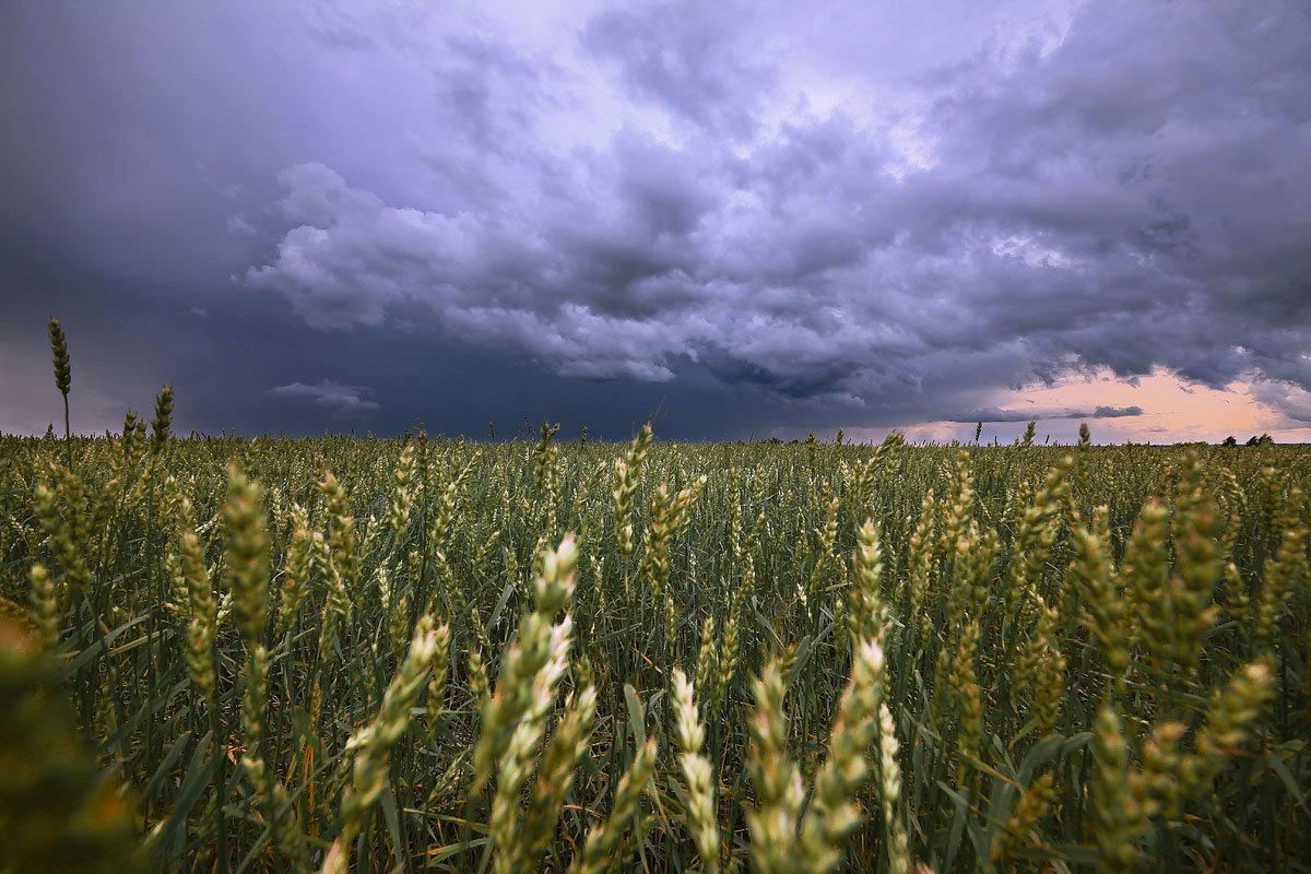 Хлебом спелым поле разродится 2 - Сергей Жуков