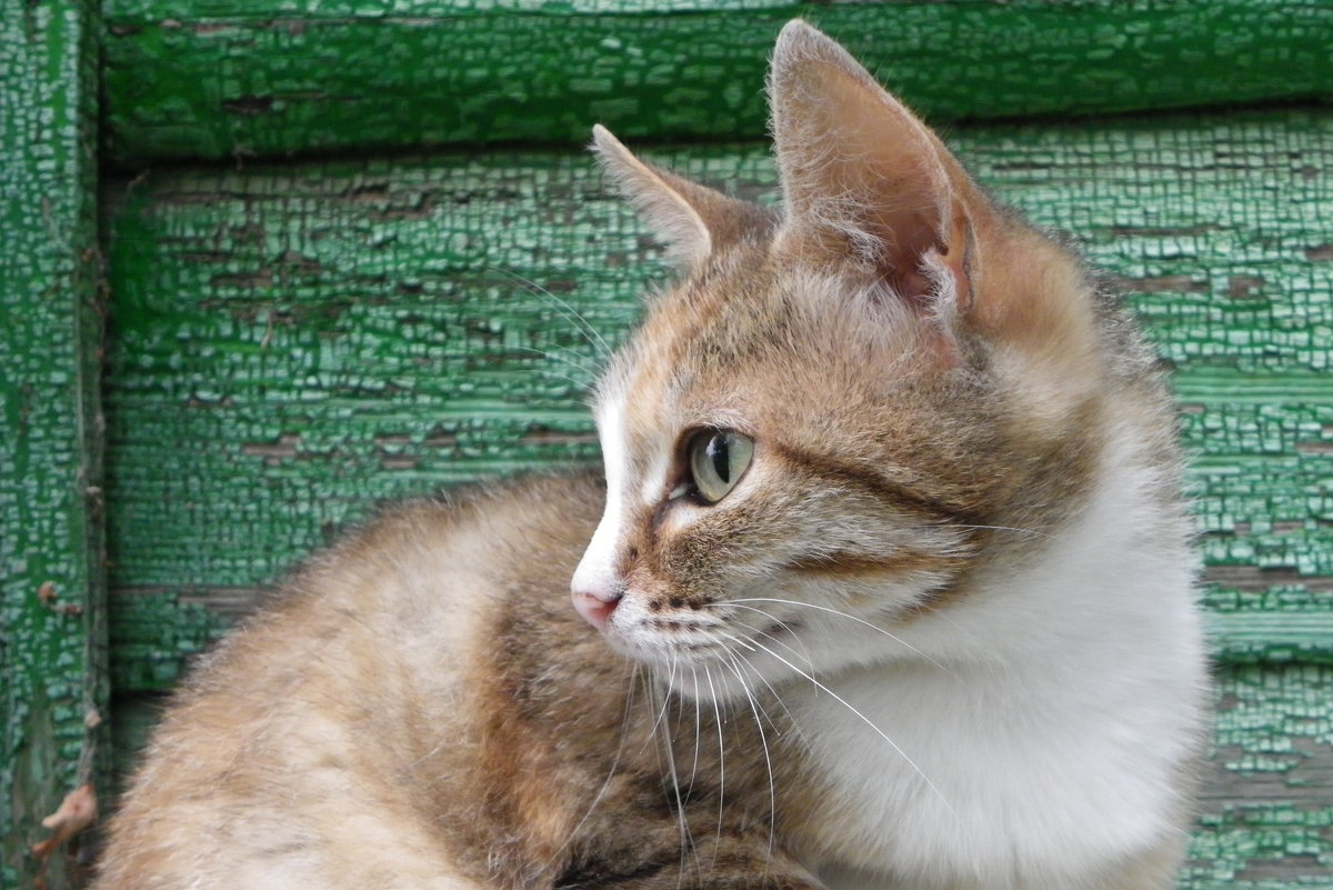 Соседский кот опять идет............. - Святец Вячеслав