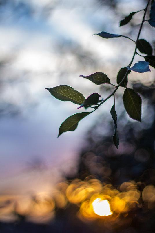 Закатное - Анастасия