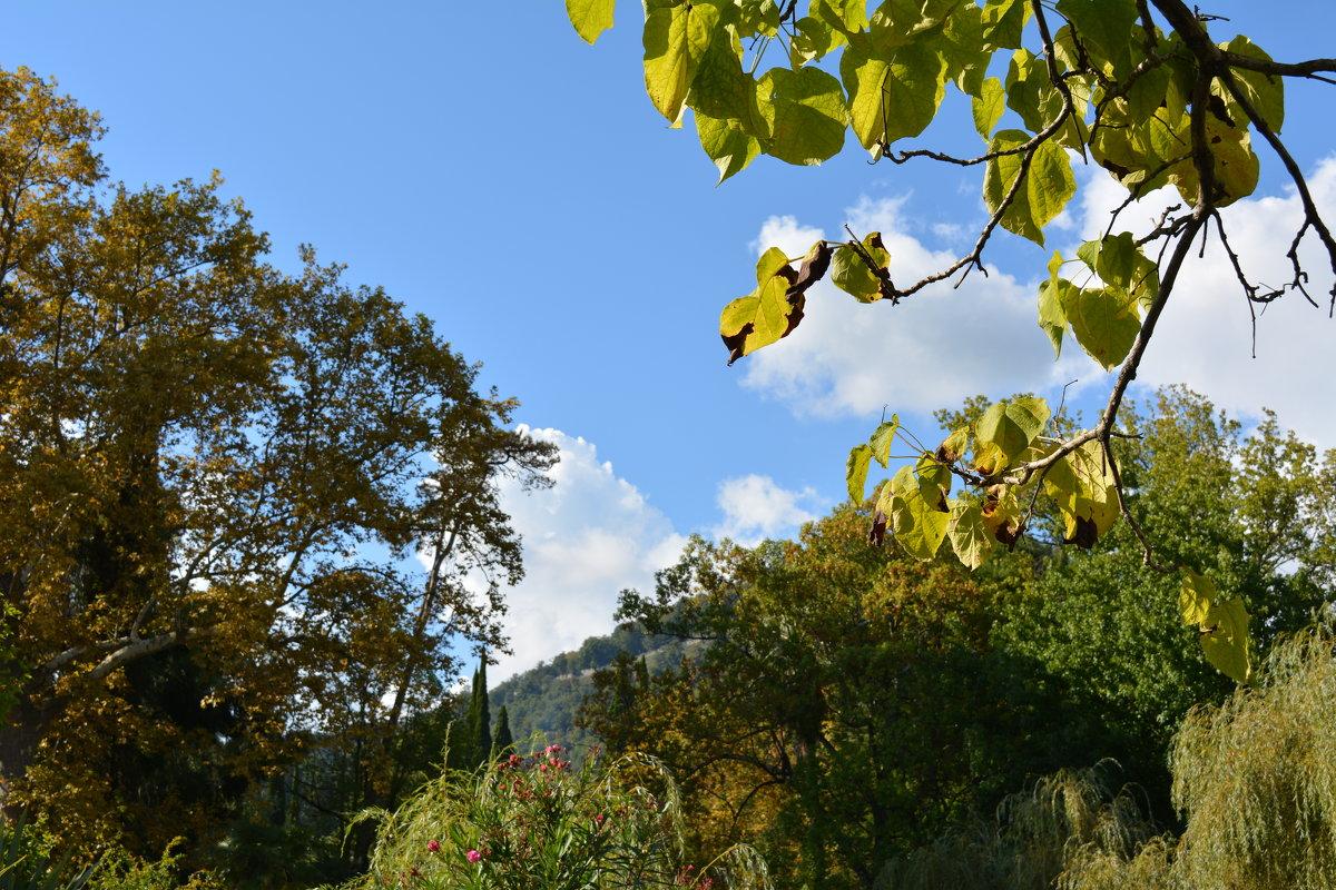 Осень приходит и на Черное море. Абхазия, Новый Афон. - Михаил Поскотинов