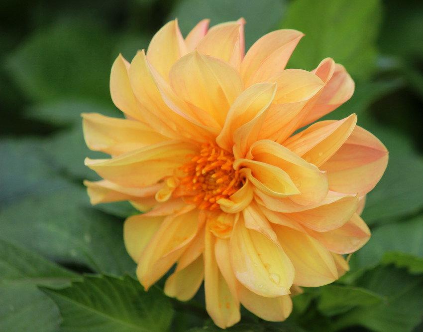 Цветы запоздалые - Вера Моисеева