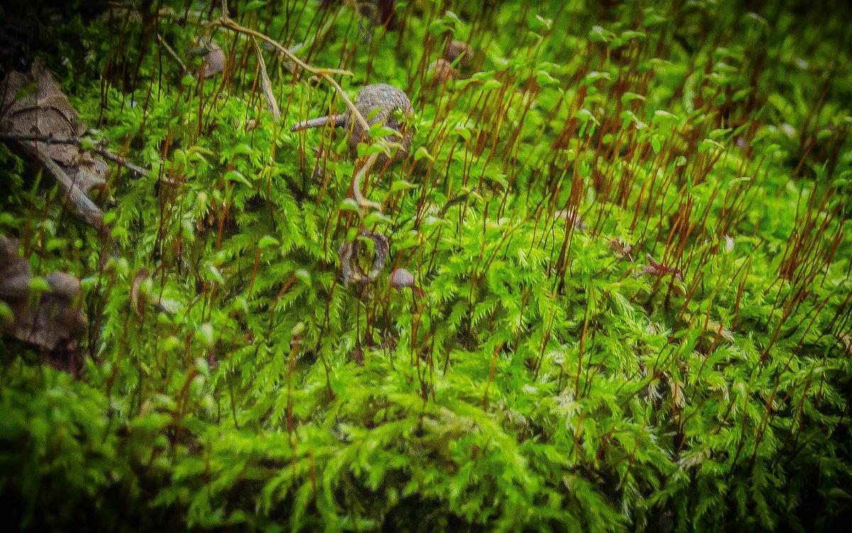 мох - олеся тронько