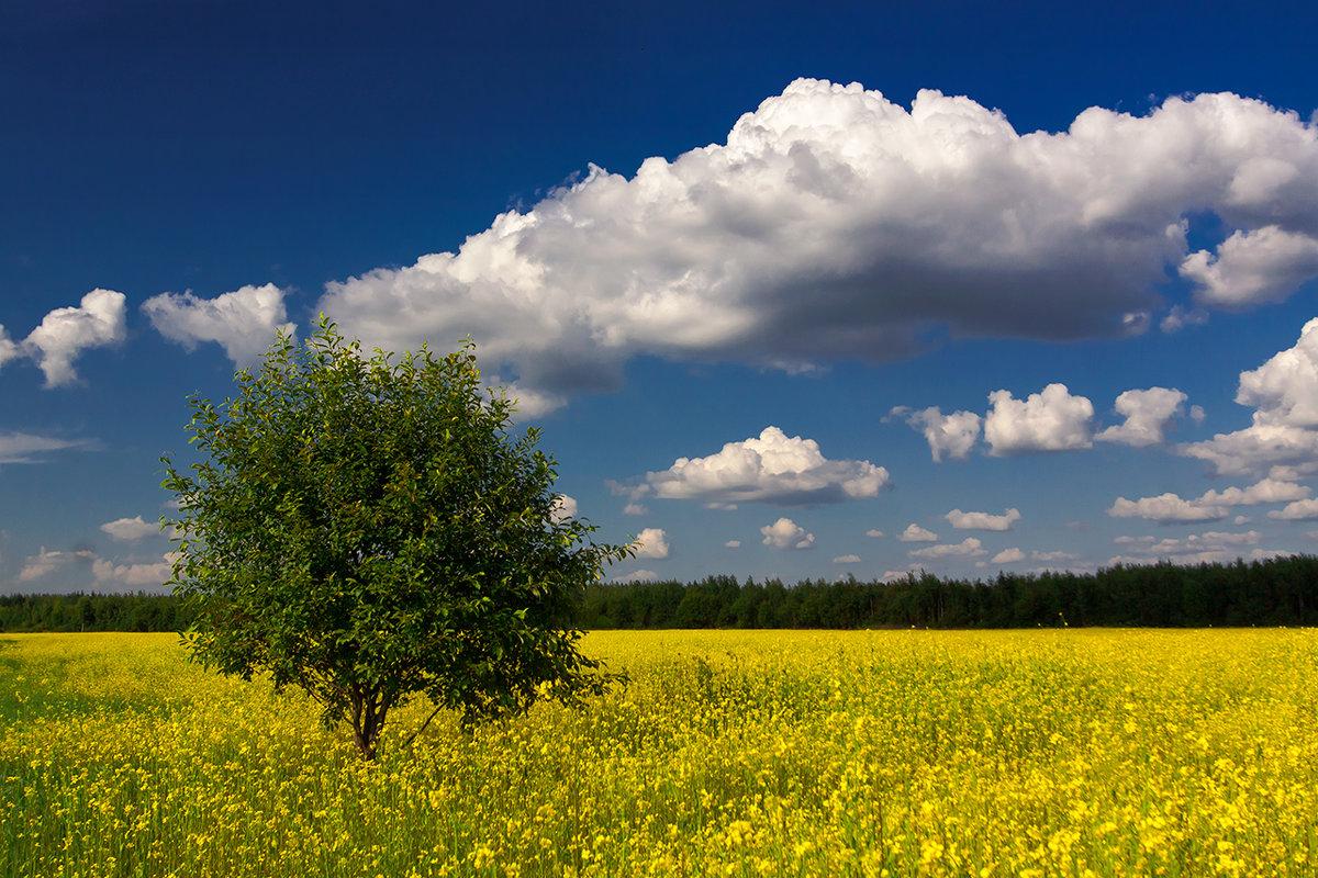 Знойным летом - Владимир Миронов