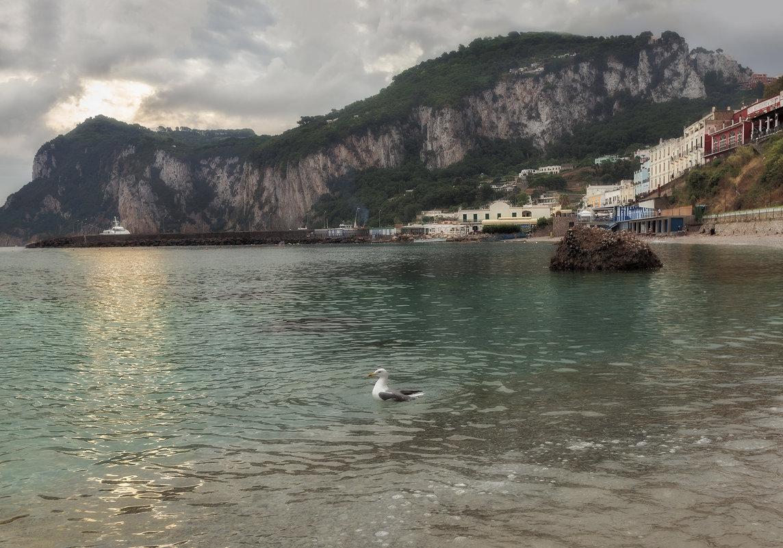 Если чайка села в воду - жди хорошую погоду - Shapiro Svetlana