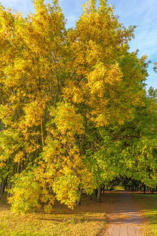 Осень пришла... - Леонид Соболев