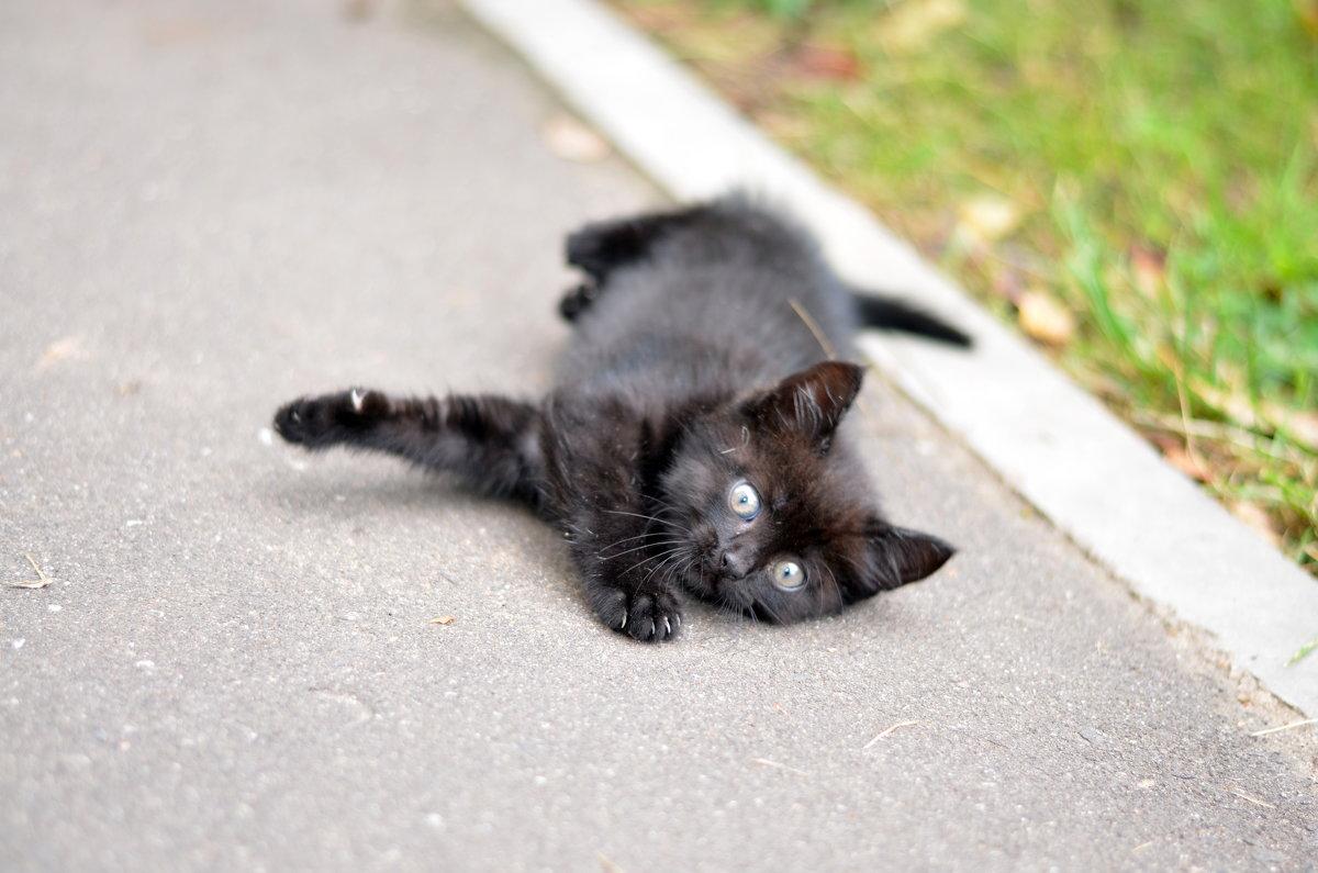 Игривый котенок - Марина Романова
